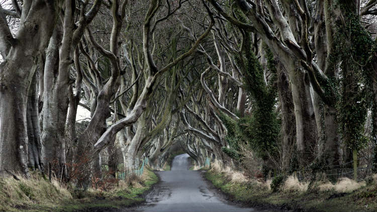 Dark Hedges Westeros