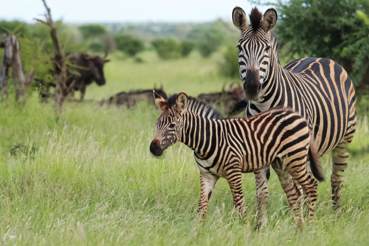 Kruger National Park South Africa.jpg