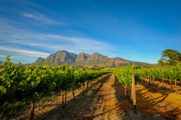 Stellenbosch Vineyards.jpg