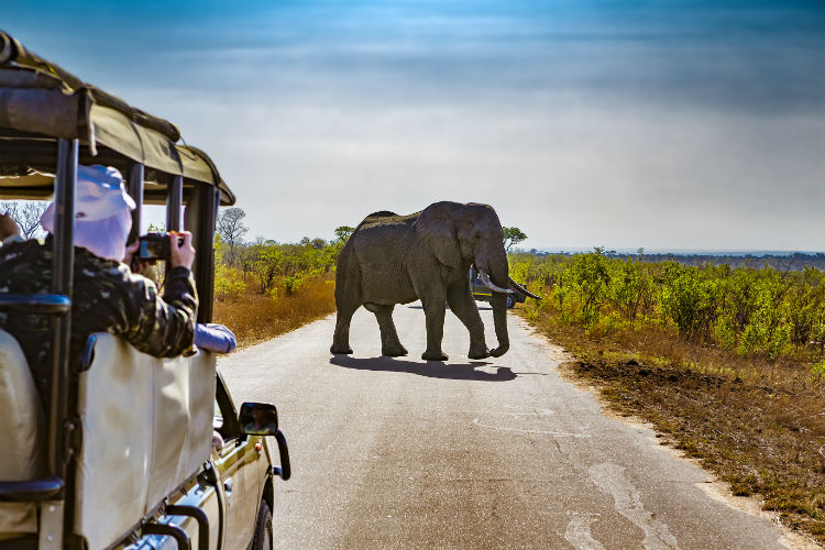 Safari in Kruger National Park.jpg
