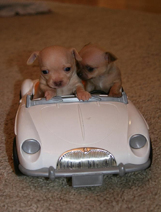 Puppies in car:ac633f854791bbdc9c32f99e9cf0b858.jpg