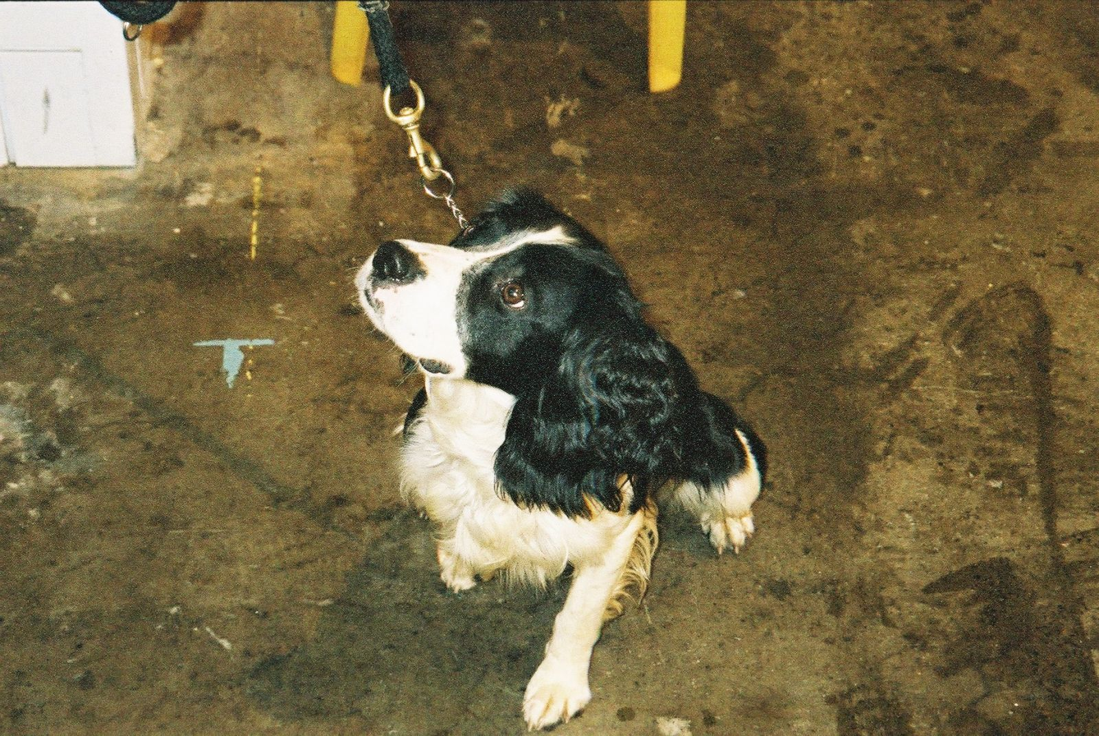 sniffer dog earls court