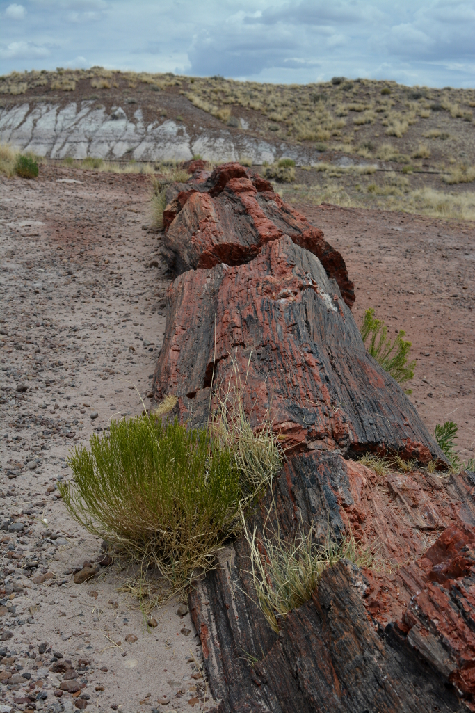 petrified tree