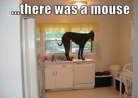There Was A mouse...