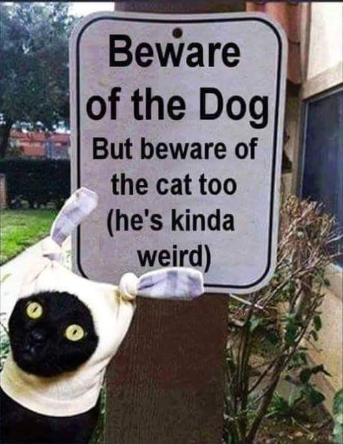 #######Beware of the Dog