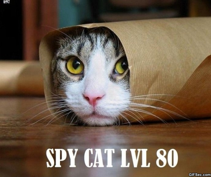 ###################################SPY CAT LVL 80