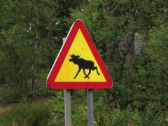 moose crossing.JPG