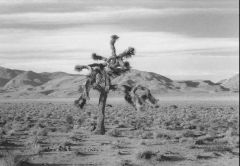 The Joshua Tree, U2's Joshua Tree