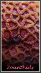 Red Zoas