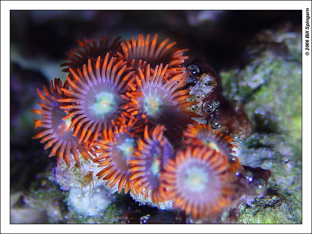 Redever You Want To Call Em Zoas