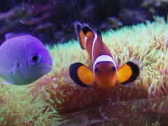 A couple of curious fish