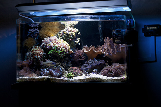 New Aquascape