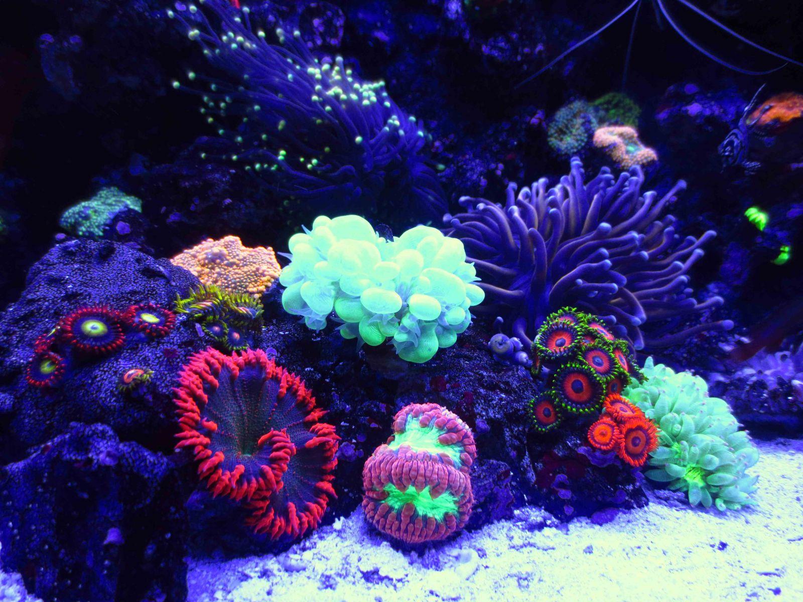 Biocube Close Up Tank Shots Nano Reef Com Community