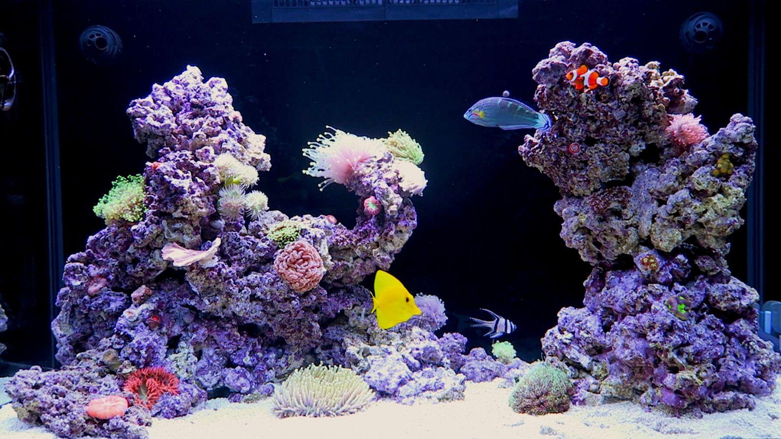 red sea max c 250 aquarium close up tank shots nano. Black Bedroom Furniture Sets. Home Design Ideas