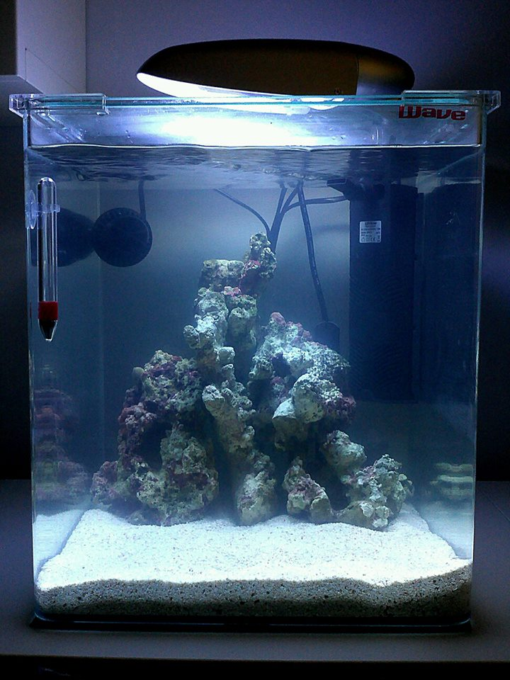 george 30l nano reef tank shots nano community. Black Bedroom Furniture Sets. Home Design Ideas