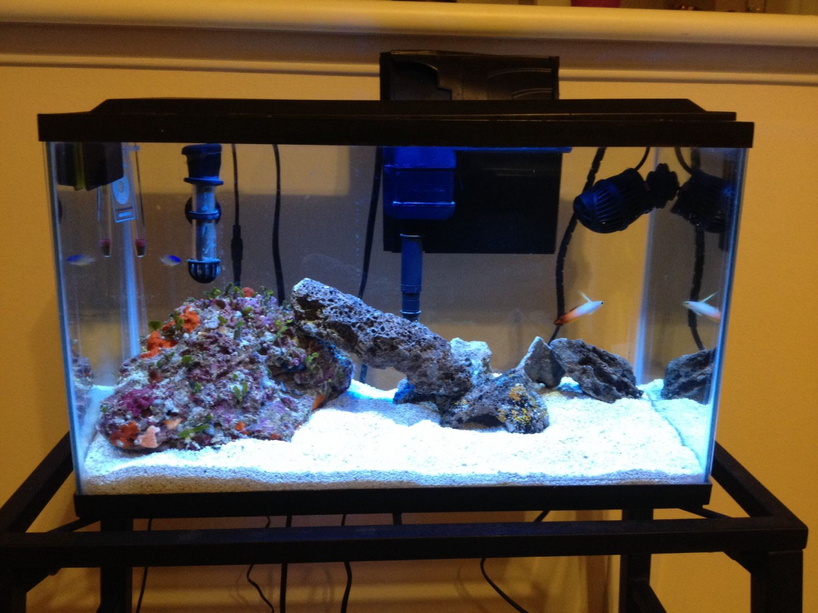 Cornesto 39 s 10 gal budget nano aquarium tank shots nano for 10 gallon fish tank with filter