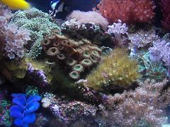 20 gallon reef video
