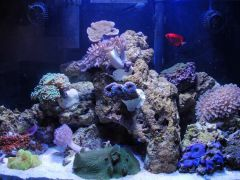 rcervel's 29 gallon reef 9/10
