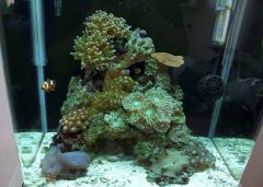 FTS of my 12g six months ago