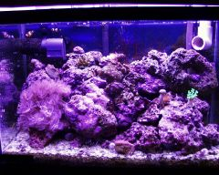 20 gallon reef