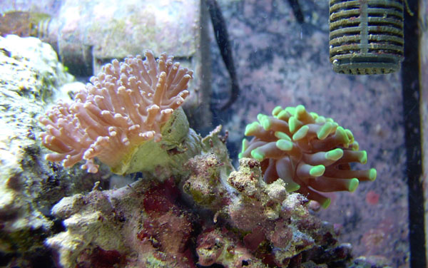 hammer and frogspawn 10-1-05