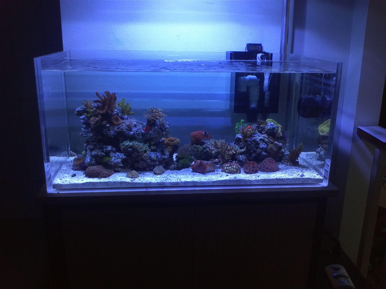 40 gallon breeder rimless tank shots nano for 10000 gallon fish tank
