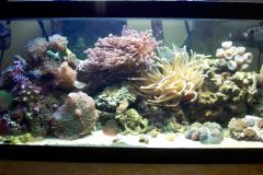 Reef_a_roni's reef