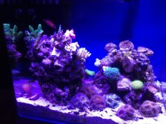 Crappy iPhone pic of my 4 gallon