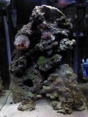 first reef
