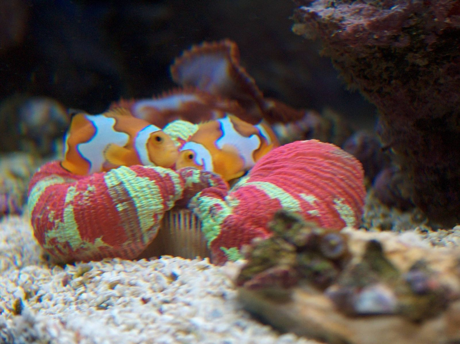 """Orange You Glad We Found Nano-Reefs.com""?"