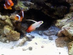 Firefish and his Clowning friends
