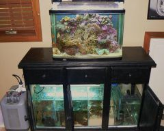 2ft Display 4ft Sump/Refugium