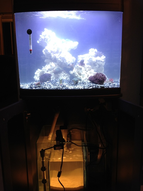New(er) BioCube in place