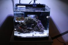 New upgraded drilled biocube 14