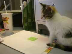 My Cat Polly At The Office