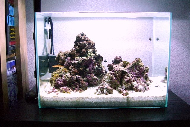 What S The Best Nano Aquascape You Ve Ever Seen General Discussion Nano Reef Community