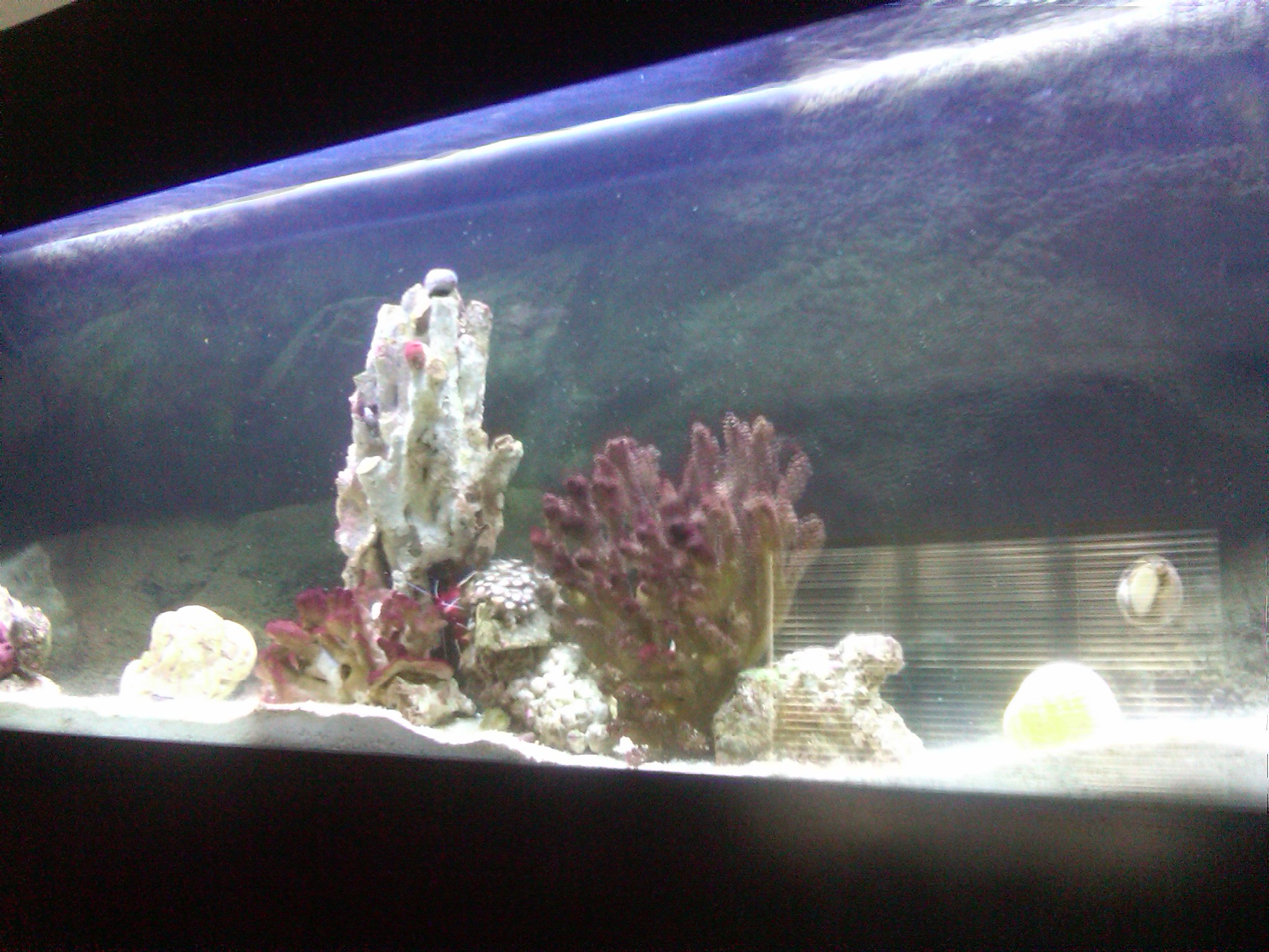 invertebrates live all fish Beginners Discussion Nano Reef