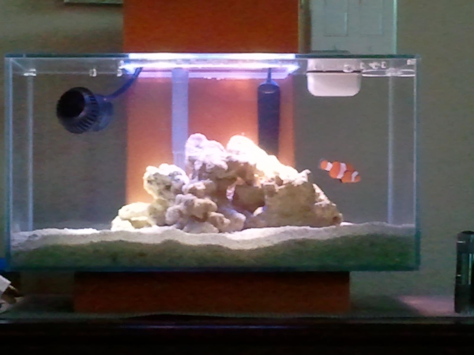 1st fluval edge saltwater setup Aquarium Journals Nano Reef