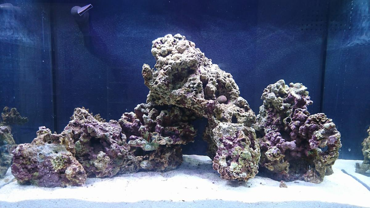 My first Saltwater tank. How's my scape? - Aquascaping ...