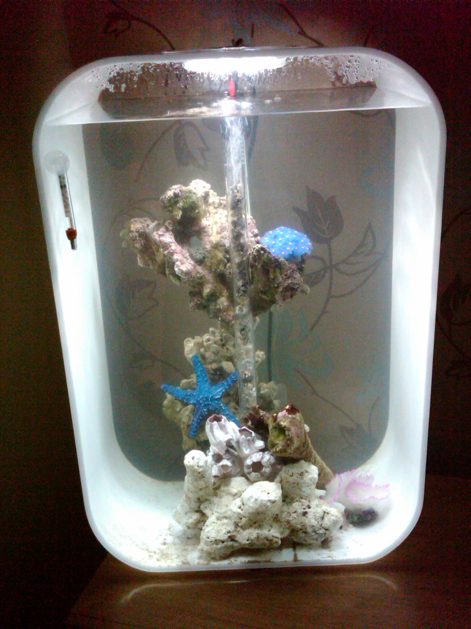 16gal biorb life 60 converting to marine aquarium. Black Bedroom Furniture Sets. Home Design Ideas