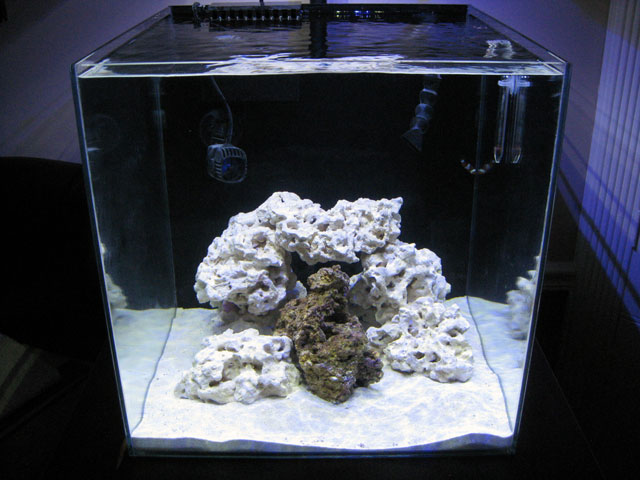 Aegeon S 25g Cube Build Aquarium Journals Nano Reef