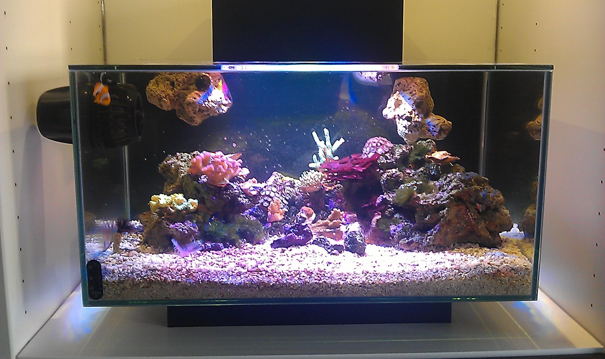 3 foot office nano neptune ato kit page 4 aquarium journals nano reef community