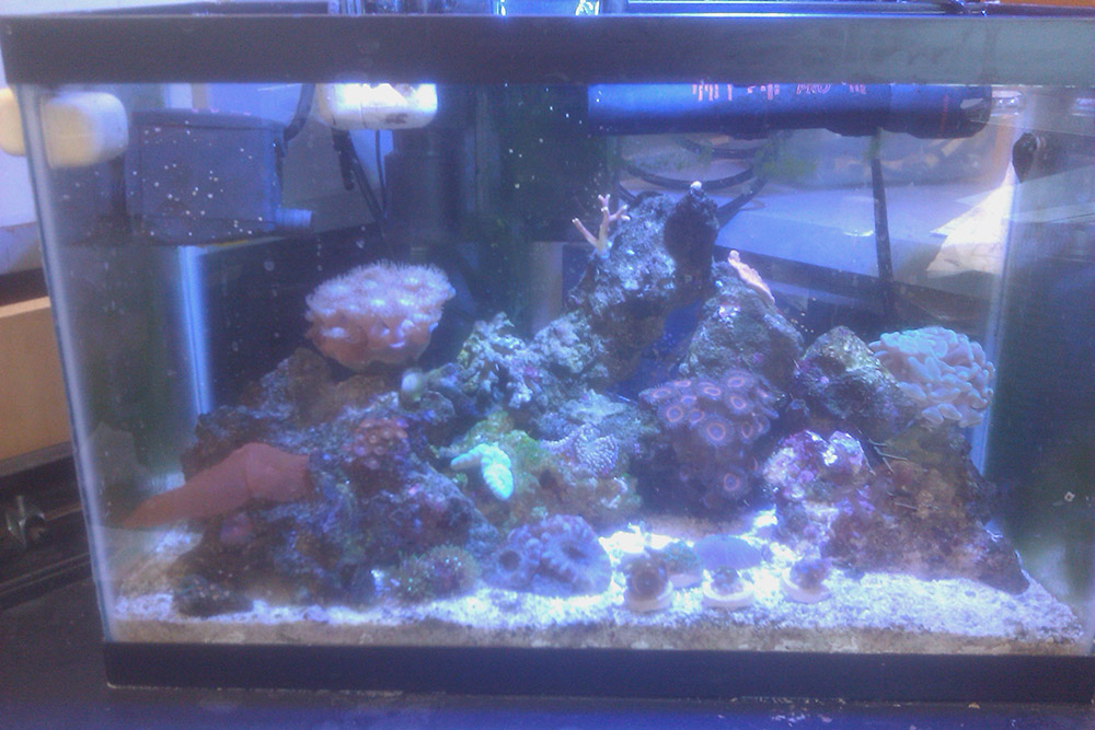 ladybryozoa's 6.25g petco arc - aquarium journals - nano-reef.com ...