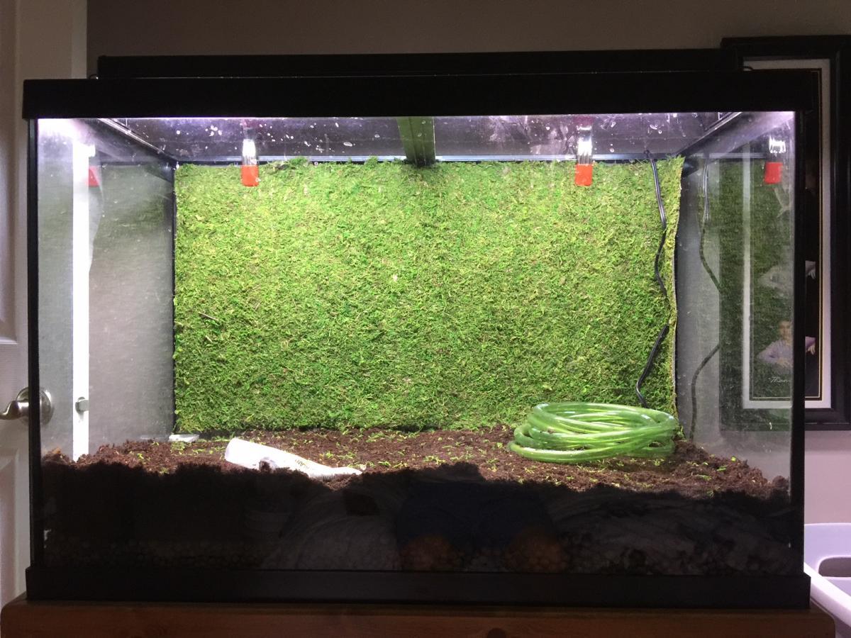 65gallon Dart Frog Tank Aquarium Journals Nano Reef Com Community