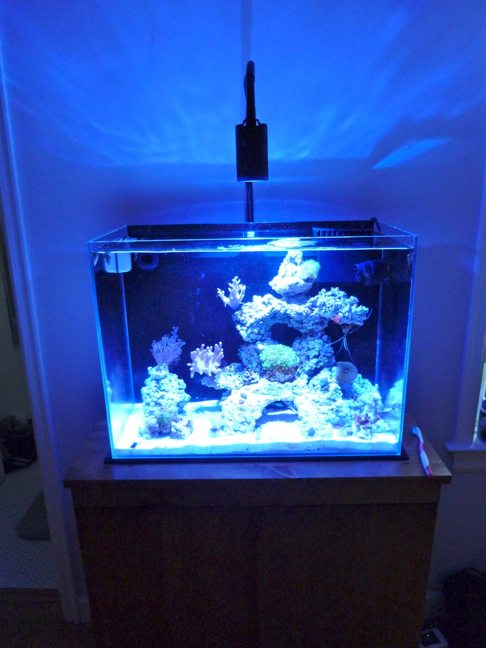 kessil help lighting forum nano reef com community
