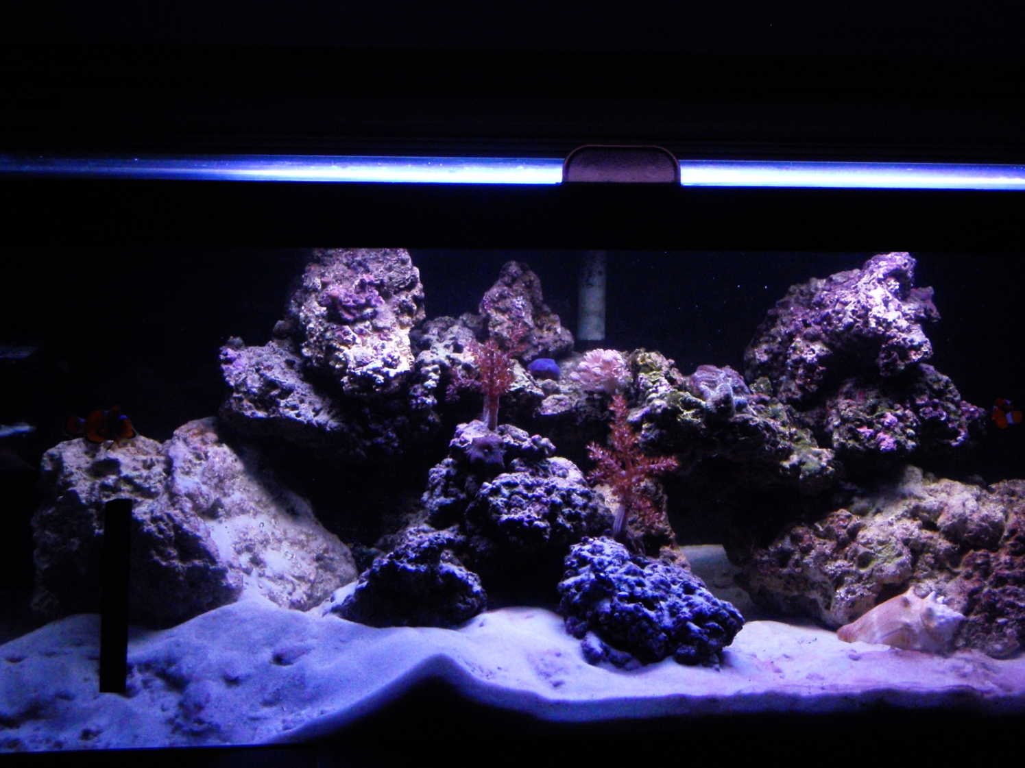 aquascaping tips - general discussion - nano-reef community
