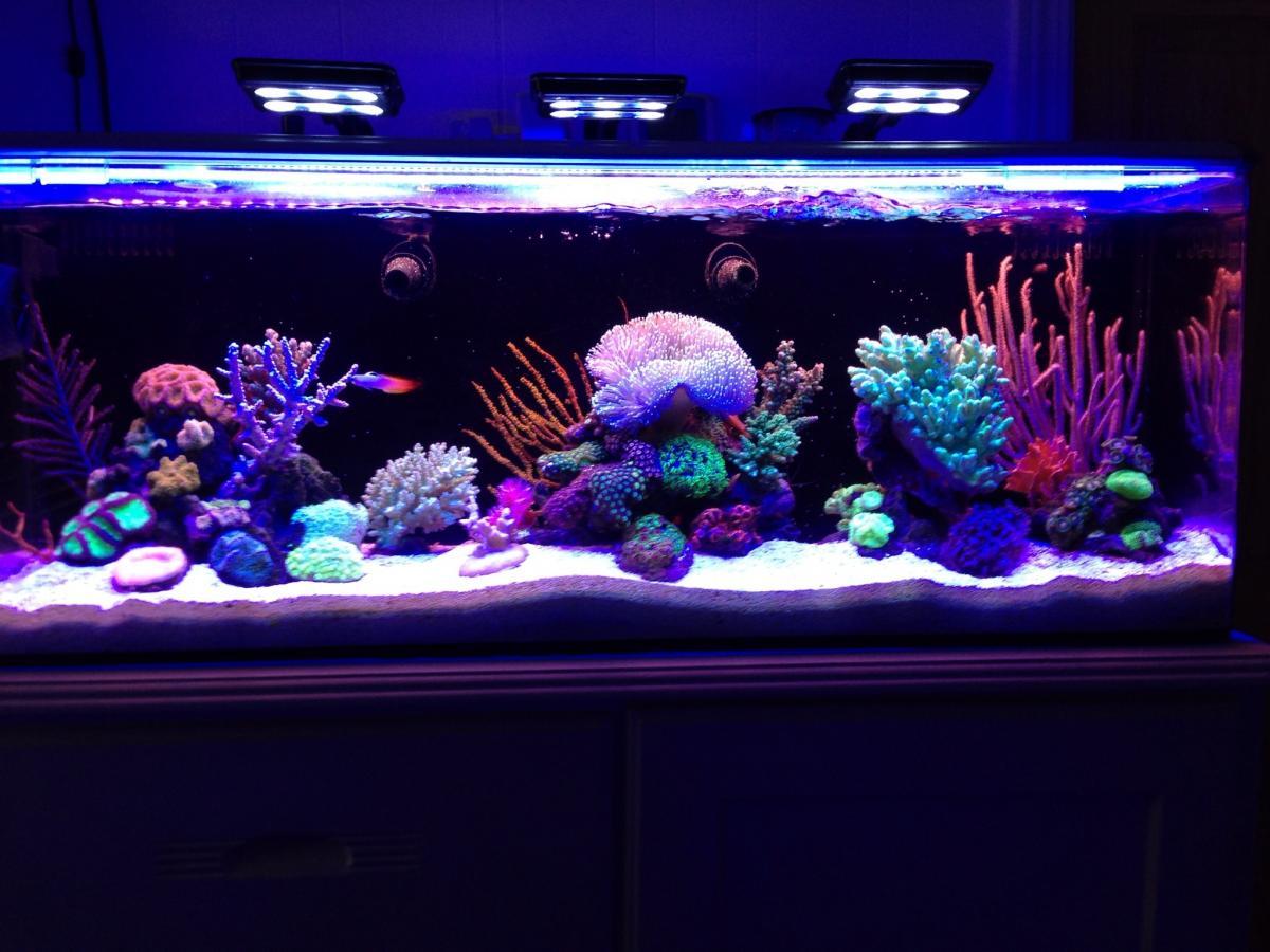 Egginis nuvo 24 aquarium journals nano community for Aquarium recifal nano