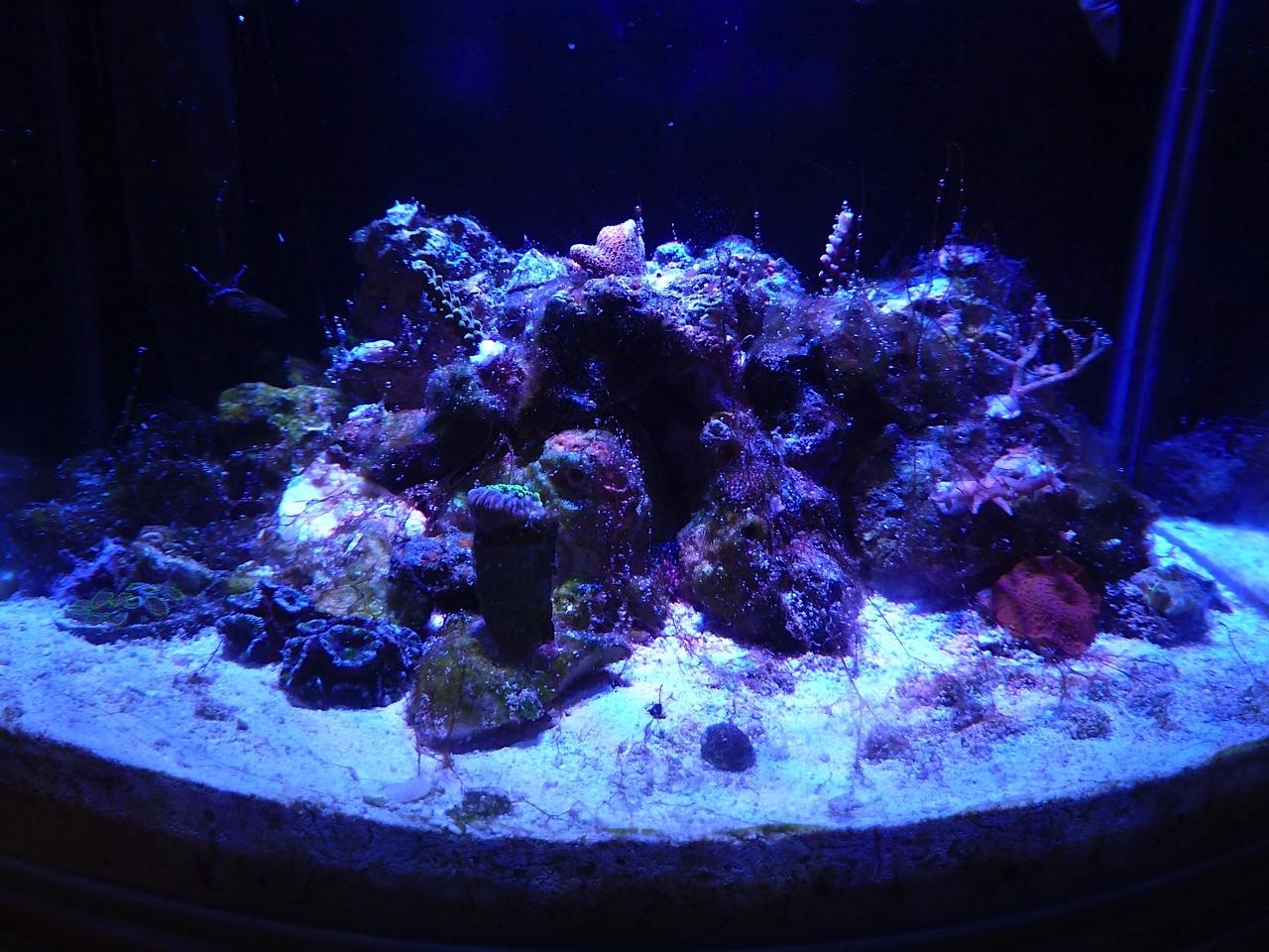 how to get rid of cyanobacteria