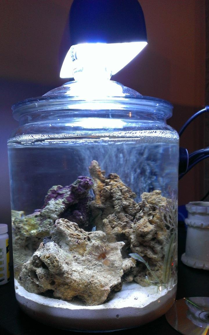 Advice For Noob On 2 5 Gal Cookie Jar Pico Reef Pico