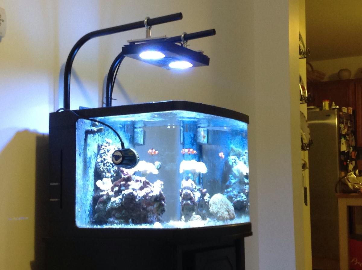 ... post-78385-0-59040800-1384006071_thumb.jpg & What is the Best Retrofit LED Kit for the Oceanic Biocube 29 ...
